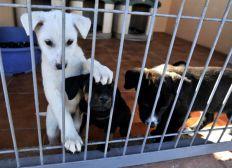 Bote para los perros y gatos de la protectora de Granollers