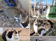 Solidarité chats errants à stériliser