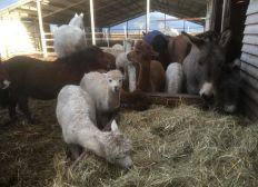 Hilfe bei Tierarztrechnungen für die Kuschelfarm in Krostitz