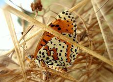 Objectif biodiversité !