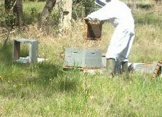 Florent ou La passion des abeilles