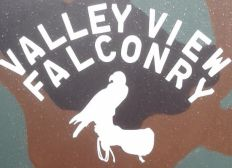 Valley View Falconry