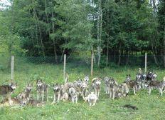 SOS Pour Les Husky