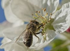 Les ruches de l'Etang de Brisemiche