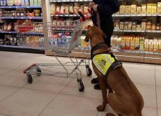 auf eigenen Beinen mit Unterstützung eines Hundes stehen