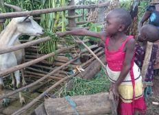 GAGTAG Tanzania - Give a goat take a goat