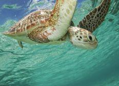 Seychelles marine conservation