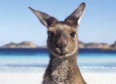 Help Ruby move to Australia