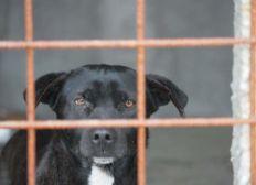 Private dog shelter Albinuta Stea Romania