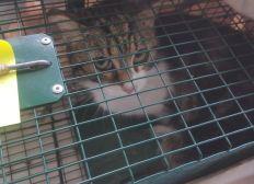 Solidarité chats errants nourriture et sterilisations soins Marseille 11eme