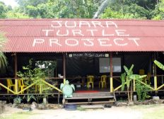 Juara Turtle Project : association de protection des tortues en Malaisie