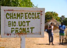 Quinoa - Projet Sénégal 2018