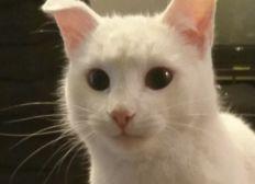 Sauvez un chat de l'amputation