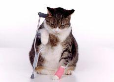 operacion de gatita