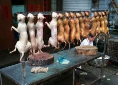 Save the dogs from the meat trade