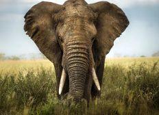 Volontariat protection de la vie sauvage en Afrique du Sud