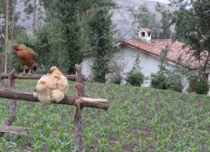 Supporting and promoting the turism in Cuyaqui Wayi (beloved house) - Peru.