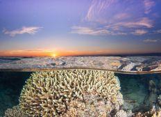 Soutien aux défenseurs des océans et de la biodiversité réunionnaise.