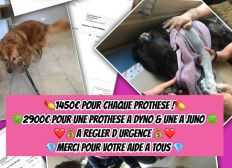 Protheses pour dyno&juno