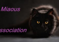 Association Miaous