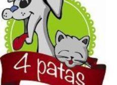 amigos de cuatro patas- colegio delia zapata olivella