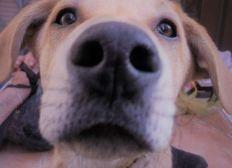 Pour aider Titi à retrouver son chien Chocolat
