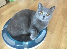 Tierklinikkosten für Katze Nala