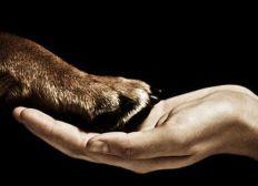 Ayuda y cuidado para animales maltratados