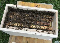 Mission Bienenrettung