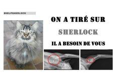 HELP SHERLOCK
