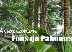 ASSOCIATION FOUS DE PALMIERS