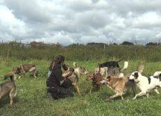 Zentrum für verlorene Hundeseelen - die letzte Chance
