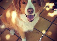 Sauver Dubaï, chien de médiation Résilienfance