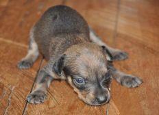 Operación Dogky Ayúdame a caminar