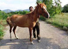 HorseSave
