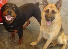 Club canino colombia