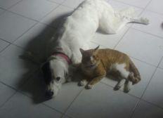 Rescatando mascotas