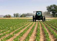 Projet Agricole Eloge AID