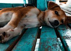 Hogar para perros abandonados