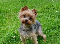 Salvar la vida a ELA, mi perra de año y medio