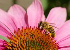Aufbau eines Bienenreservats