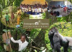 Aidez-nous à sauver les gorilles et les chimpanzés de la forêt du Mayombe !