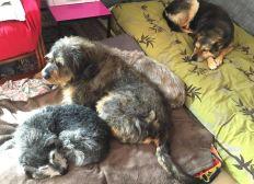 MERCI d'aider CHANTAl, hospitalisée, à PAYER   450€    le 31 août 2018 pour la pension de ses animaux.
