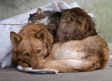 Hilfe für Tiere in Not
