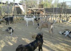 New home for street animals in Turkey / Neues Zuhause für Straßentiere in der Türkei