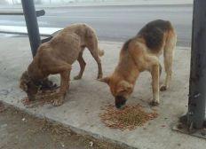 alimenta un perro de la calle