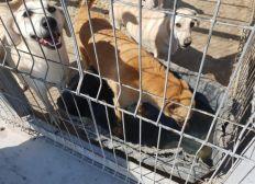 Futter und Wassereimer für Hunde im Shelter Rumänien