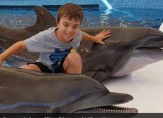 Im Alter von 5 Monaten wurde ich ein Unfallopfer nun ist meine letzte Hoffnung eine Delphin Therapie