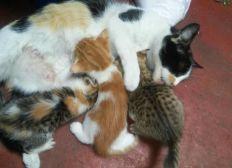 Ayuda para gatitos de la calle. Gatitos corren peligro al no encontrar hogar. Gastos en medicina y ayuda desinteresada. Inicio de un futuro ayudando animales