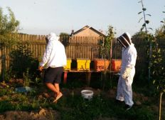 My remote beekeeping project